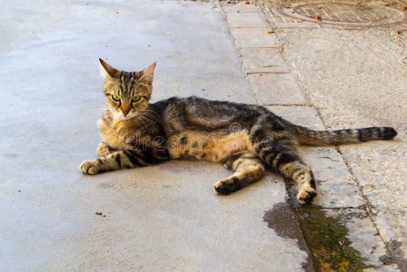 Volwassen verdwaalde gestreepte katkat met gouden ogen, die nieuwsgierig de camera bekijken stock foto