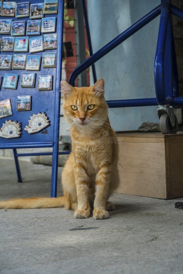 Volwassen verdwaalde oranje gestreepte katkat met gouden ogen, die nieuwsgierig de camera bekijken royalty-vrije stock afbeelding