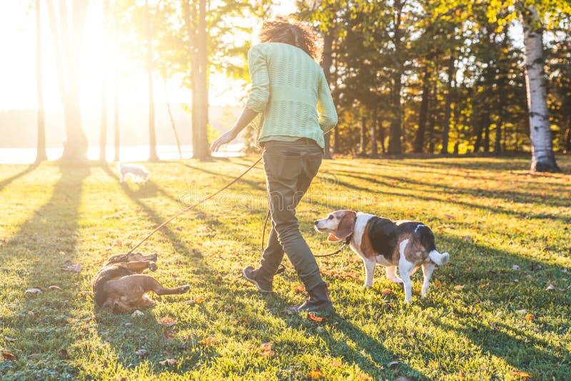 Volwassen vrouw die de honden lopen bij park stock fotografie