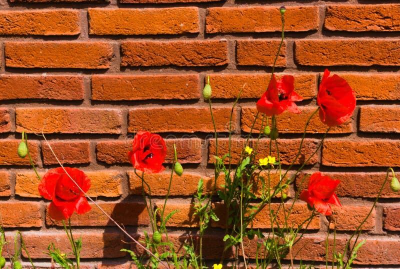 Von Blumen zuerst im Fr?hjahr bl?hen lizenzfreies stockfoto