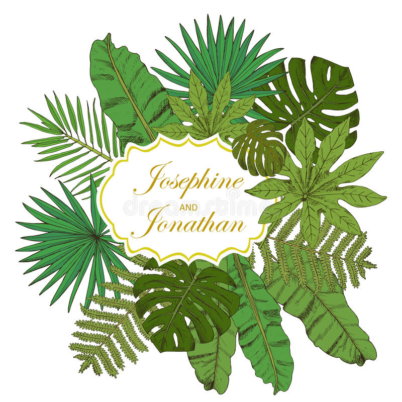 Von der Blumenfeldserie Sammlung mit tropischen Blättern in der Skizzenart De vektor abbildung