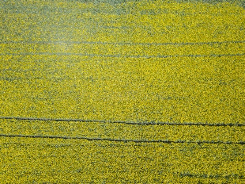 Von der Luftdraufsicht des mehrfarbigen Feldes der gelben Blumen, gereift lizenzfreie stockfotografie