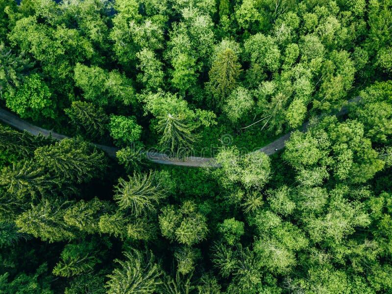 Von der Luftdraufsicht der Landstraße grüner in der Sommerwaldländlichen Landschaft in Finnland lizenzfreies stockfoto