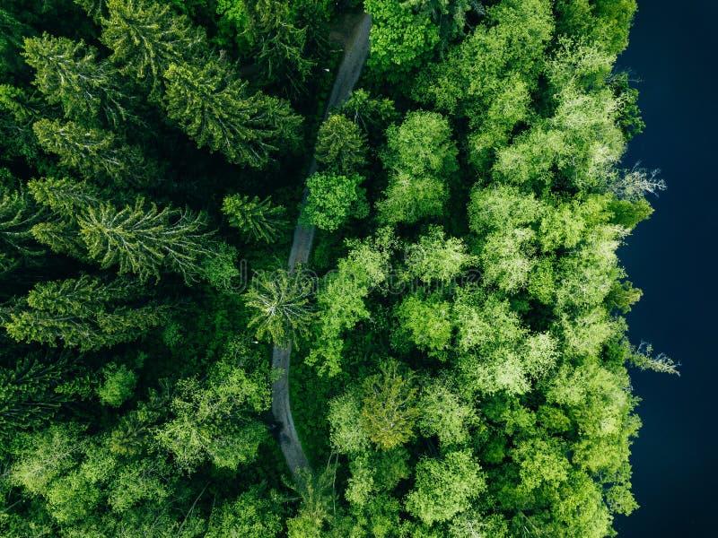 Von der Luftdraufsicht der Landstraße im grünen Sommerwald und im blauen See L?ndliche Landschaft in Finnland lizenzfreie stockfotos