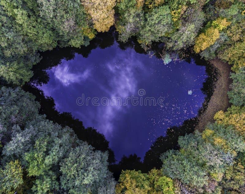 Von der Luftdraufsicht von wildem Waldsee lizenzfreies stockbild