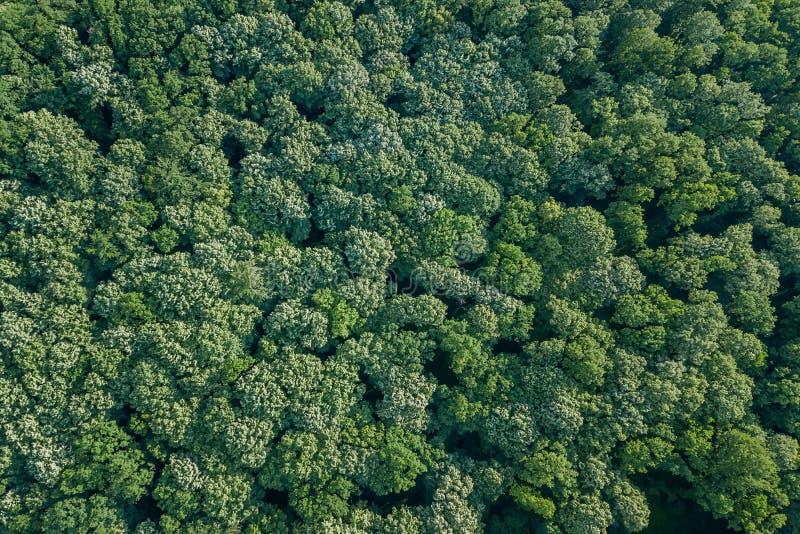 Von der Luftdraufsichtwald, Waldansicht von oben stockfotos