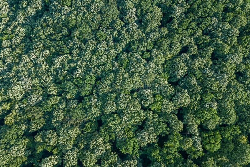 Von der Luftdraufsichtwald, Waldansicht von oben lizenzfreies stockfoto