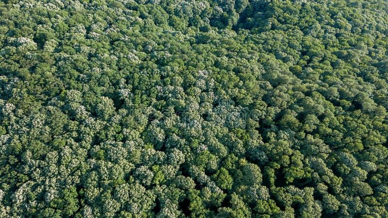 Von der Luftdraufsichtwald, Waldansicht von oben stockfoto