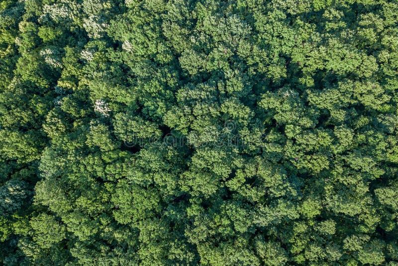 Von der Luftdraufsichtwald, Waldansicht von oben lizenzfreie stockfotografie