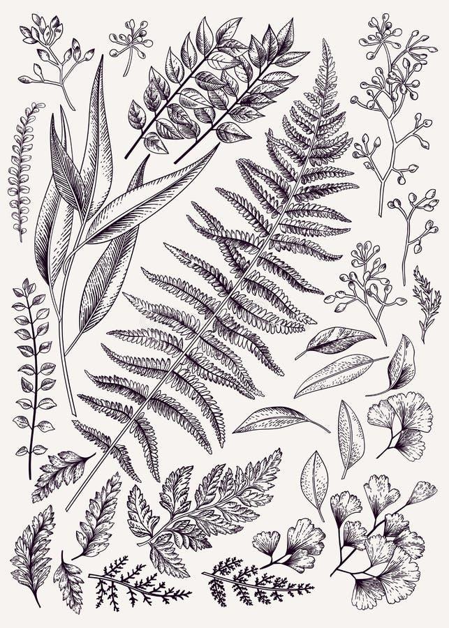 Von Hand gezeichnet Herbstblätter stock abbildung