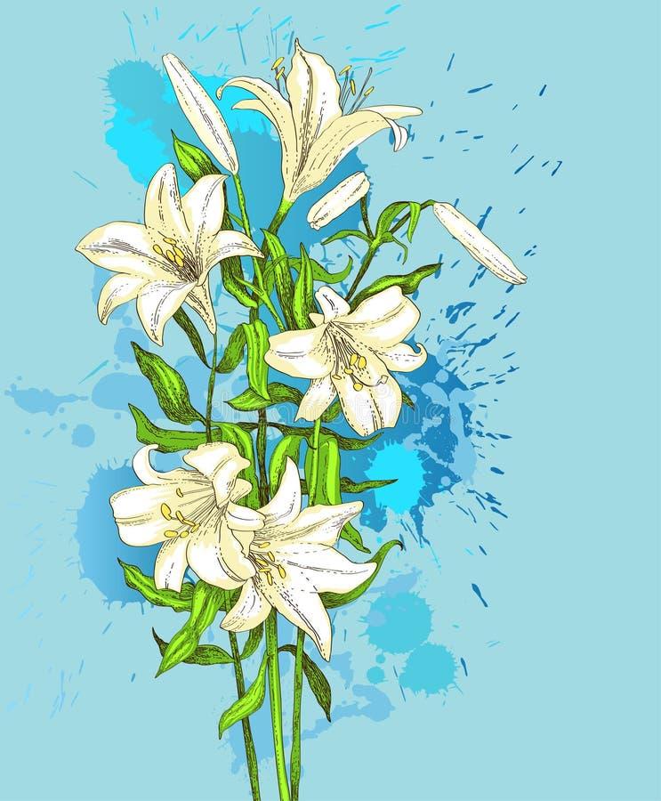 Von Hand gezeichnet Lilie auf blauem Hintergrund stock abbildung