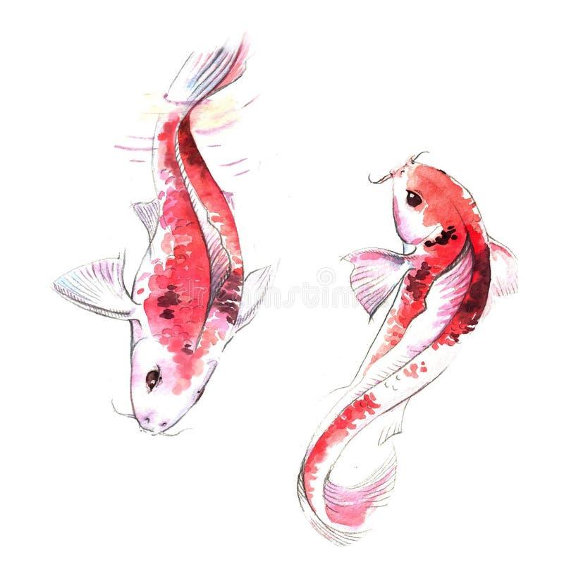 Von Hand gezeichnete Aquarellillustration von Paaren von roten Karpfen fischt im Wasser lizenzfreie abbildung