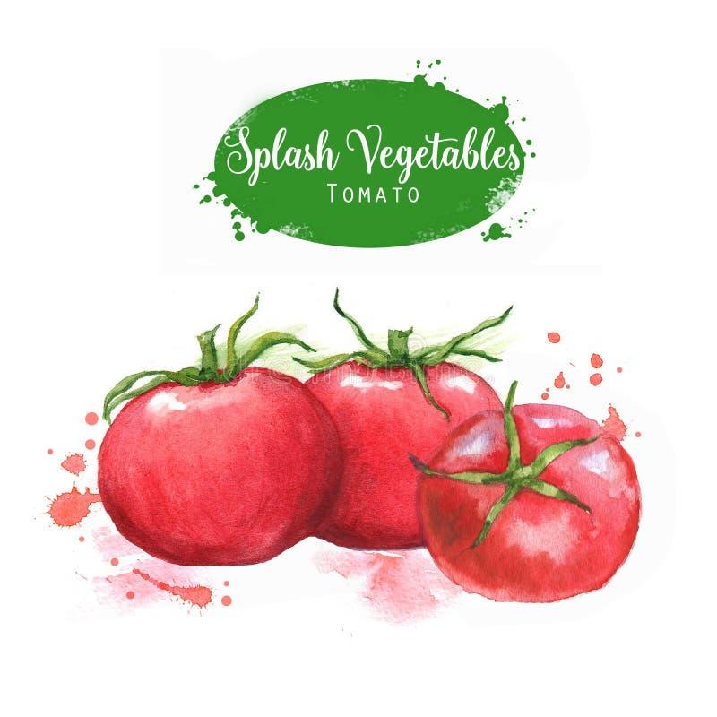 Von Hand gezeichnete Aquarelllebensmittelillustration Rote Tomaten mit spritzt lokalisiert auf dem weißen Hintergrund vektor abbildung