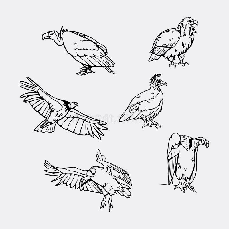 Von Hand gezeichnete Bleistiftgraphiken Greifvögel eingestellt lizenzfreie abbildung