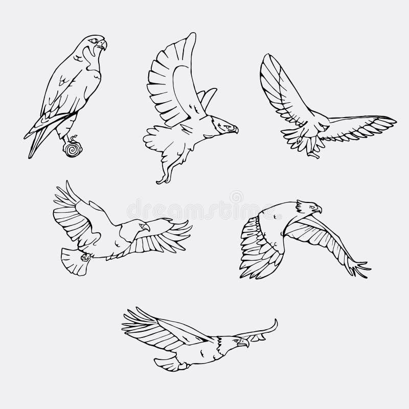 Von Hand gezeichnete Bleistiftgraphiken Greifvögel eingestellt stock abbildung