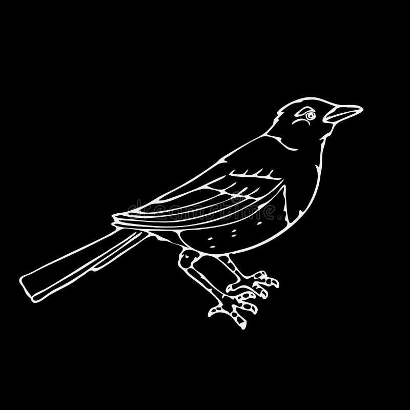 Von Hand gezeichnete Bleistiftgraphiken, kleiner Vogel stock abbildung