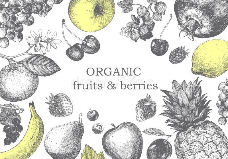Von Hand gezeichnete Illustration mit Früchten Vektor stockfotografie