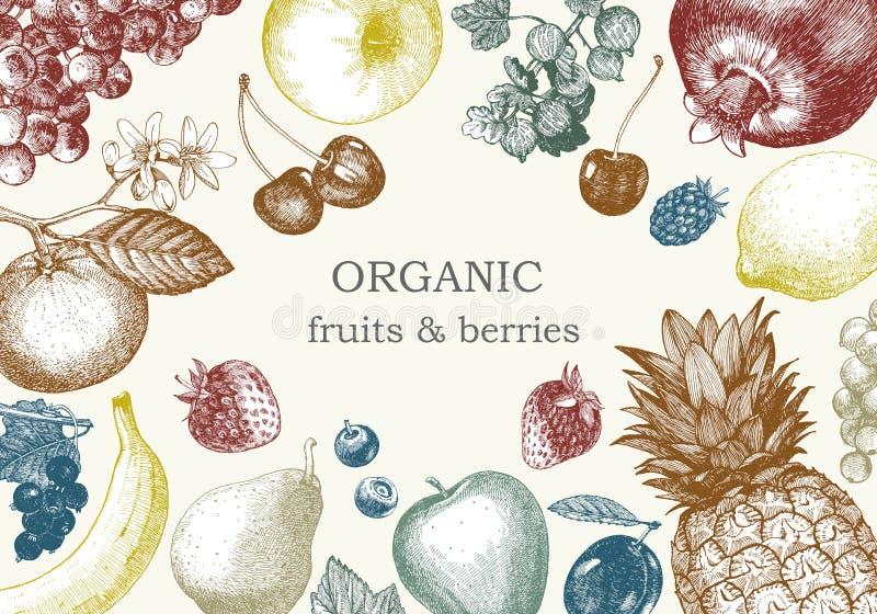 Von Hand gezeichnete Illustration mit Früchten Vektor lizenzfreie stockfotografie