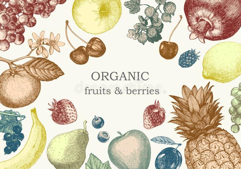 Von Hand gezeichnete Illustration mit Früchten Vektor stockfoto