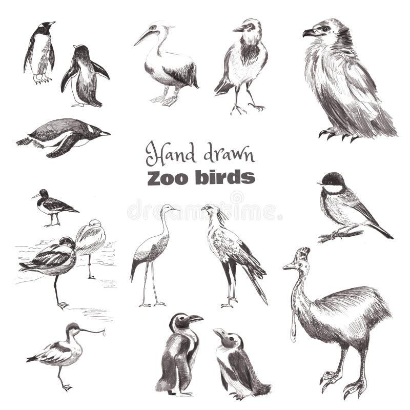 Von Hand gezeichnete Skizzenvögel Schwarzweiss-Satz Zoovögel lizenzfreie abbildung