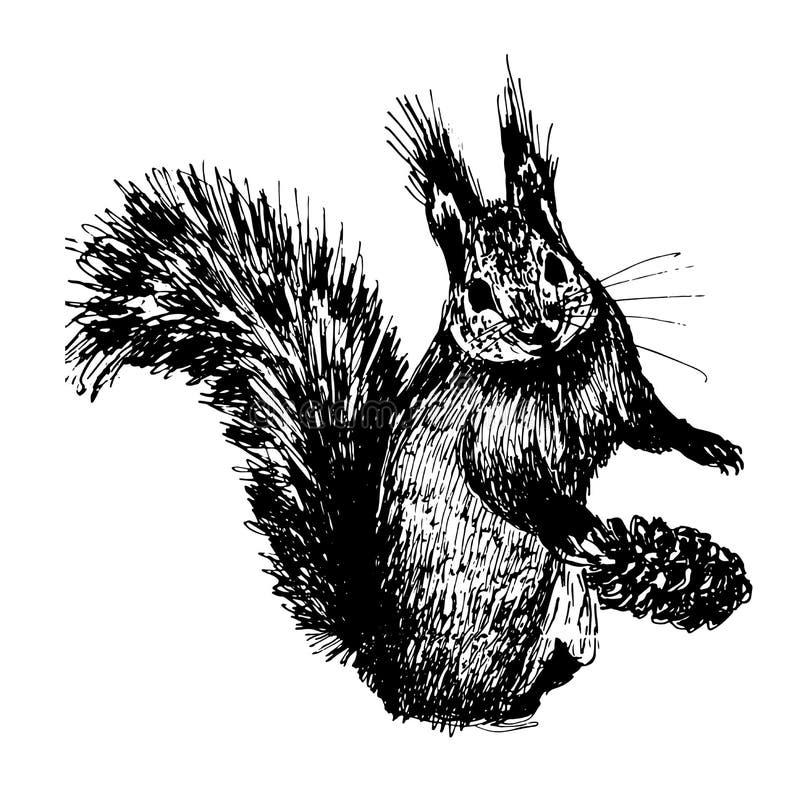 Von Hand gezeichnete Tintenillustration der kleinen Pelzeichhörnchenskizze stock abbildung