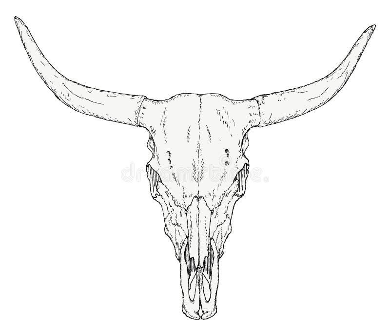 Von Hand gezeichneter Stierschädel lizenzfreie abbildung
