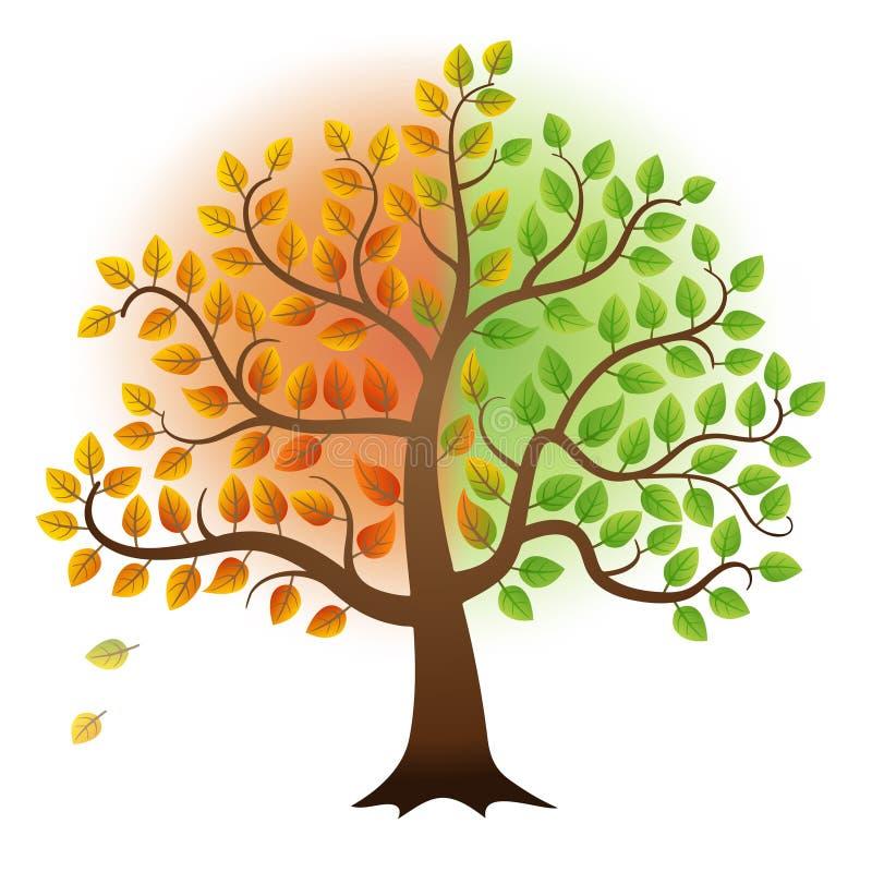 Von Sommer zu Herbstbaum lizenzfreie abbildung