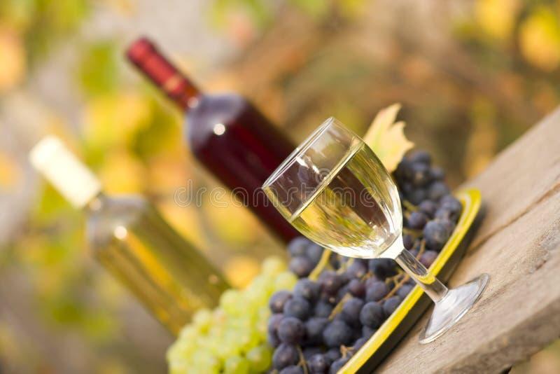 Von Traube zu Wein lizenzfreie stockfotografie
