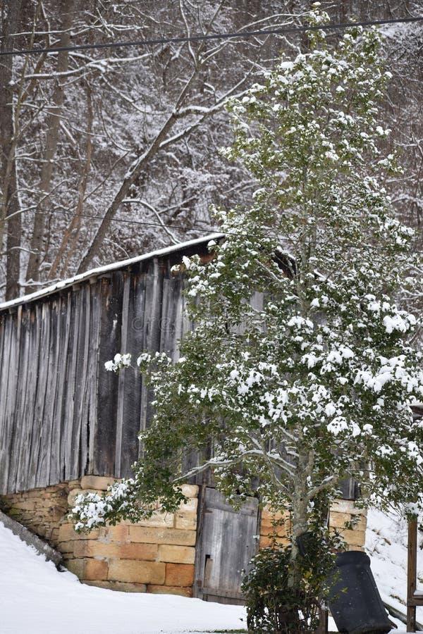Von West Virginia im Wald leben lizenzfreie stockbilder