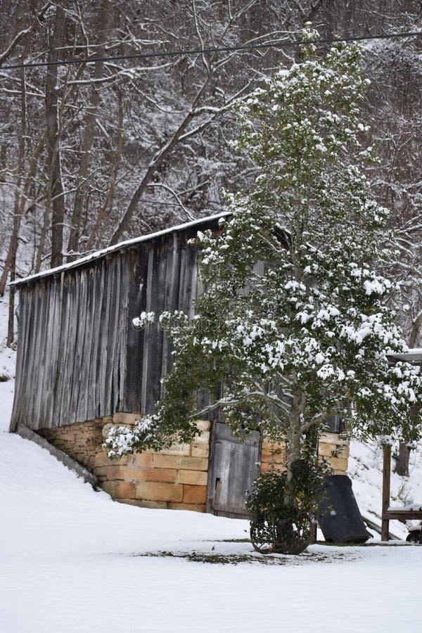 Von West Virginia im Wald leben lizenzfreies stockfoto