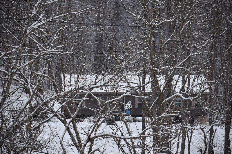 Von West Virginia im Wald leben lizenzfreies stockbild