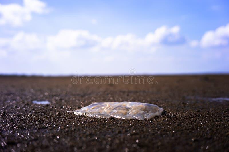 Vond die kwallen bij kust op Kuanniang, Thailand stock foto's