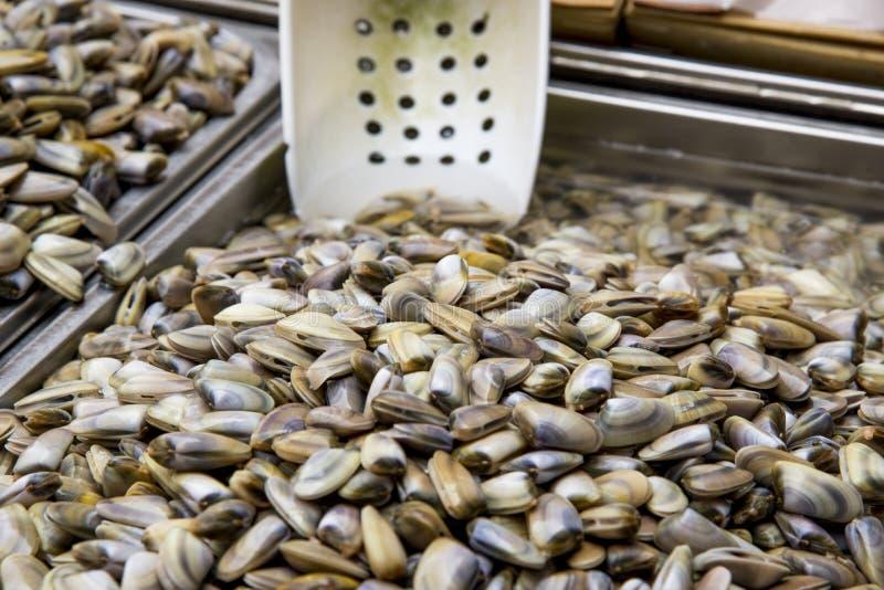 Vongole - bivalvia della classe - molluschi fotografia stock