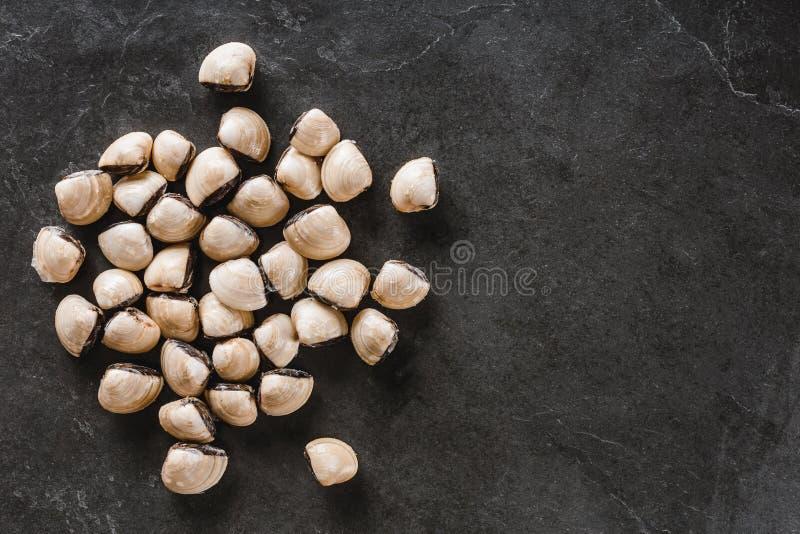 Vongole crude sul fondo della pietra dell'ardesia Frutti di mare, crostacei, vista superiore, disposizione piana, mA Ass.Comm. immagini stock