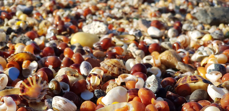 Vongole dell'oceano fotografia stock libera da diritti
