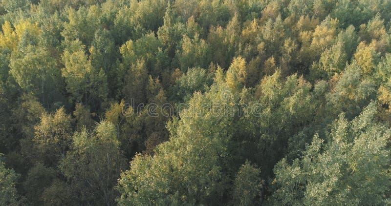 Voo aéreo sobre a floresta ensolarada do outono imagem de stock