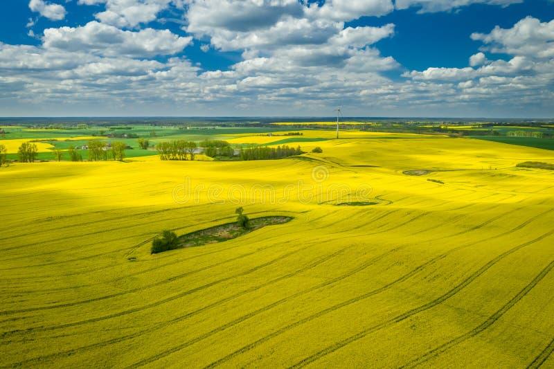 Voo acima dos campos amarelos da violação com céu azul imagem de stock