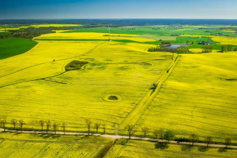Voo acima dos campos e da turbina eólica amarelos da violação no Polônia imagem de stock
