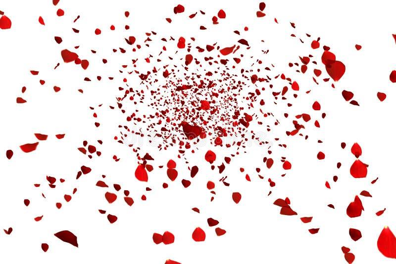 Voo cor-de-rosa das pétalas coloridas vermelhas no fundo, no amor e no dia de são valentim brancos ilustração stock