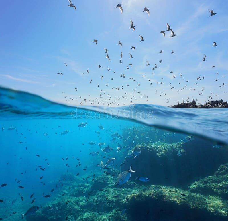 Voo da ave marinho e banco de areia do mar subaquático dos peixes imagens de stock