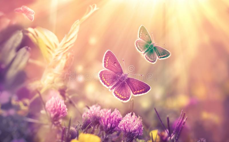 Voo da borboleta em um prado do trevo - natureza bonita, beleza na natureza imagens de stock royalty free