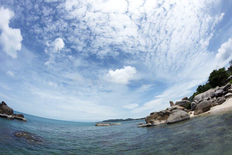 Voo da gaivota acima da praia cênico próxima do mar foto de stock