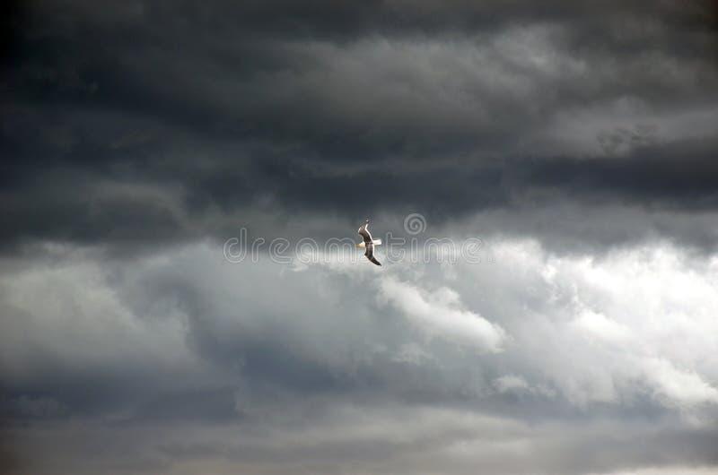 Voo da gaivota através do céu tormentoso foto de stock royalty free