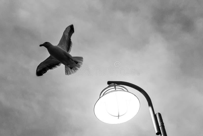 Voo da gaivota longe do ponto claro de rua fotos de stock royalty free