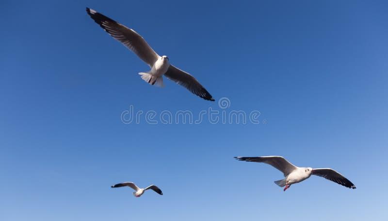 Voo da gaivota no céu fotos de stock royalty free