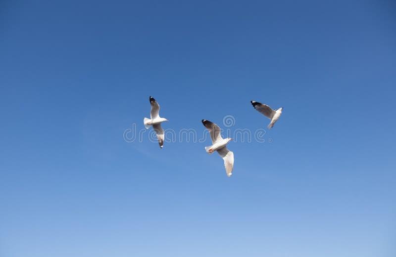 Voo da gaivota no céu foto de stock royalty free