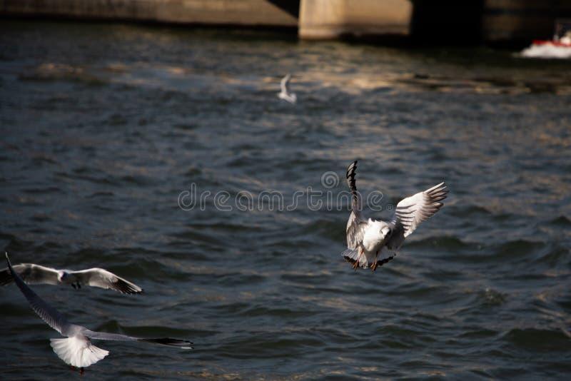 Voo da gaivota sobre o Seine River em Paris france imagens de stock royalty free