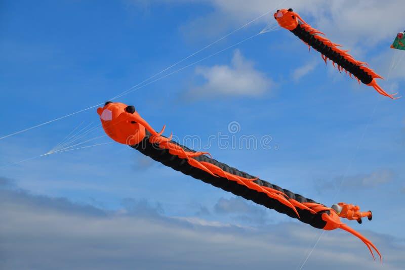 Voo da lagarta do voo do papagaio contra o céu imagens de stock