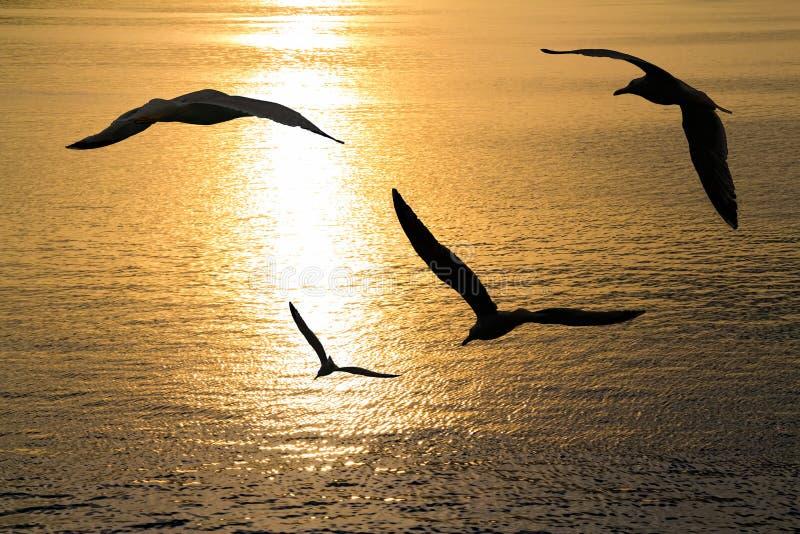 Voo das gaivotas imagens de stock royalty free