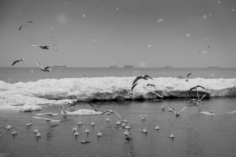 Voo das gaivotas sobre o mar do inverno foto de stock royalty free